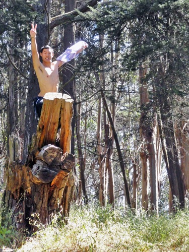 A shirtless man with short dark hair, standing halfway up a tree stump and raising his arms in the air, showing the peace sign.